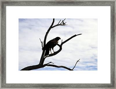 Hawk Silhouette 2 Framed Print