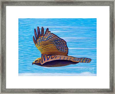 Hawk Speed Framed Print by Brian  Commerford