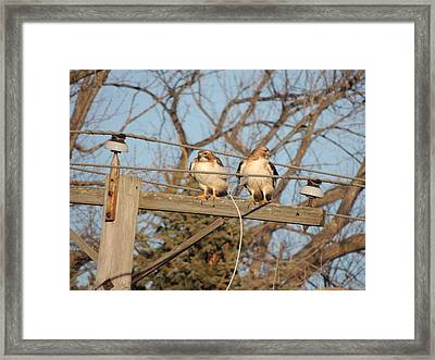 Hawk Talk Framed Print by Todd Sherlock