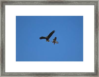 Hawk Vs Eagle Framed Print