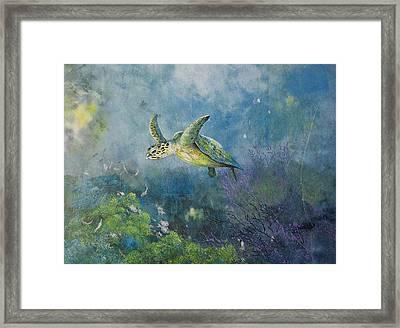 Hawkbill Turtle Feeding On Sponges Framed Print by Nancy Gorr
