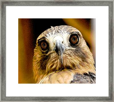 Hawkeye Framed Print by Lois Bryan
