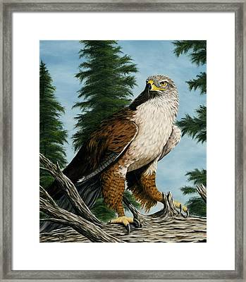 Hawkeye Framed Print by Rick Bainbridge