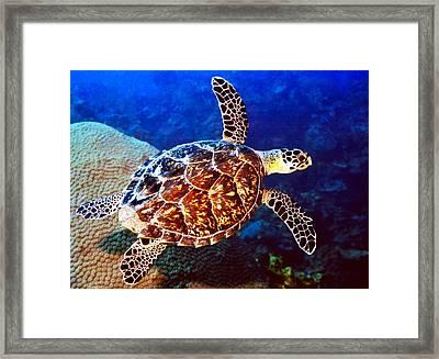 Hawksbill Framed Print