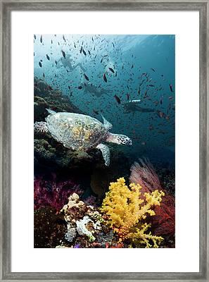 Hawksbill Turtle On Coral Reef Framed Print by Georgette Douwma