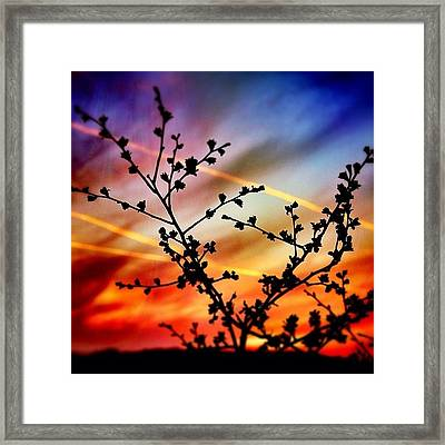 Hawthorn Sunset Framed Print