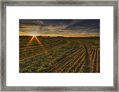 Hay And Sun Rays Framed Print by Mark Kiver