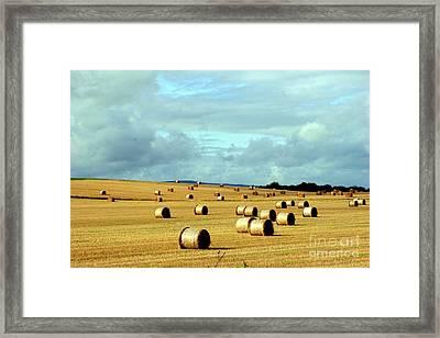 Hay Framed Print by Arie Arik Chen