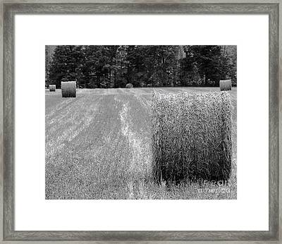 Hay Baby Framed Print by Jim Rossol