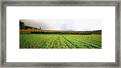 Hay Bales In A Farm Land, Germany Framed Print by Panoramic Images