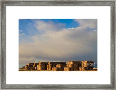 Hay Bales Framed Print by James BO  Insogna