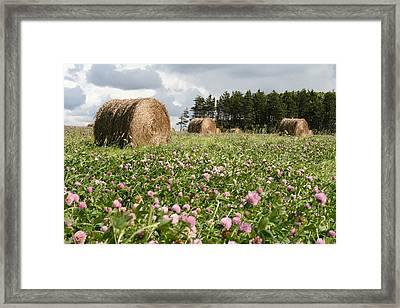 Hay Field Framed Print