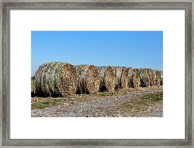 Hay Hay My My Framed Print by Bill Cannon