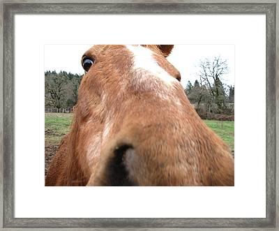 Hay? Framed Print
