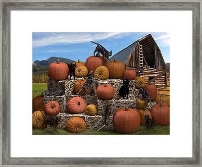 Haycats N' Pumpkins Framed Print