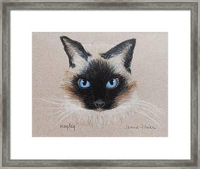 Hayley Framed Print by Jamie Frier