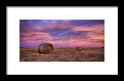 Tallgrass Framed Prints