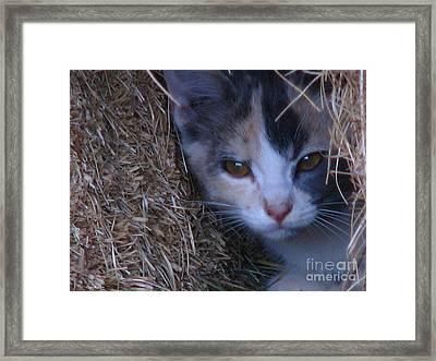 Haystack Cat Framed Print by Greg Patzer