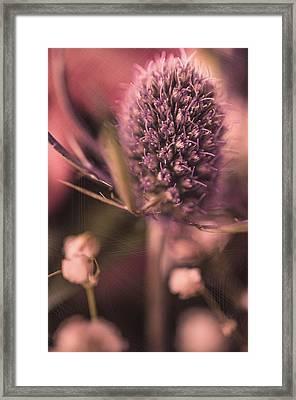 Haze  Framed Print by Maibel  Ziello
