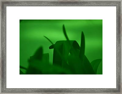 Haze Of Green Framed Print by Kiros Berhane