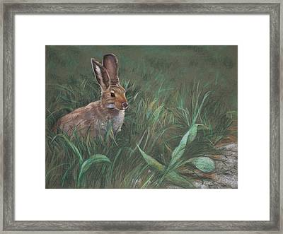 Hazel Framed Print by Christopher Reid