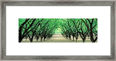 Hazel Nut Orchard, Dayton, Oregon, Usa Framed Print by Panoramic Images