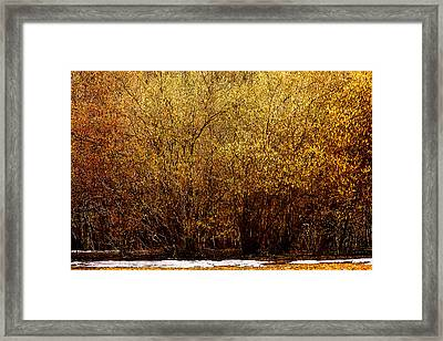 Hazel Wood In Bloom Framed Print by Alexander Senin