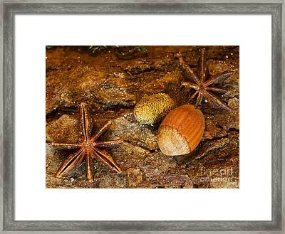 Hazelnut Decoration Framed Print by Sinisa Botas