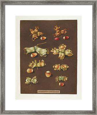 Hazelnuts Framed Print by British Library