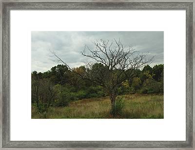 Hazy Forest No.3 Framed Print by Carla Pivonski