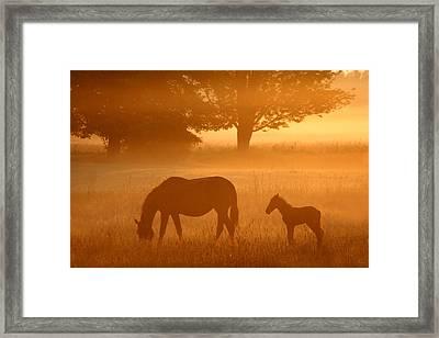 Hazy Morning II Framed Print by Brook Burling