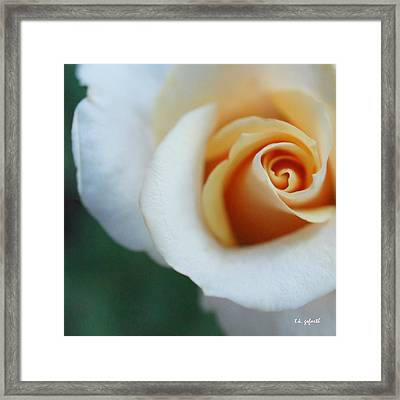 Framed Print featuring the photograph Hazy Rose Squared by TK Goforth