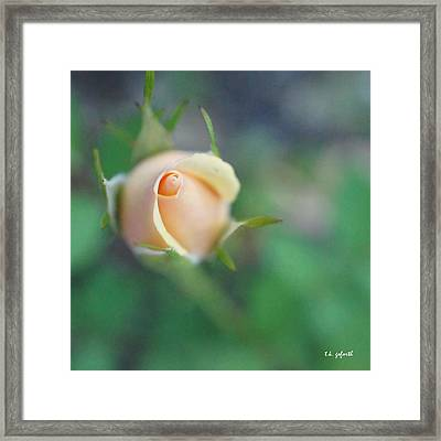 Framed Print featuring the photograph Hazy Rosebud Squared by TK Goforth