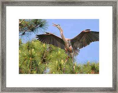 Hb In The Pines Framed Print by Deborah Benoit