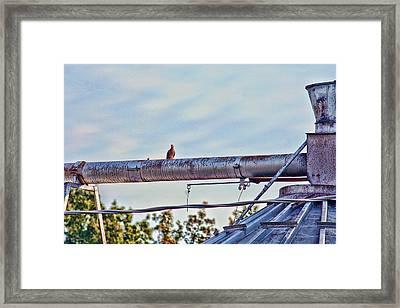 Hdr Bird On A Pipeline II Framed Print by Lesa Fine