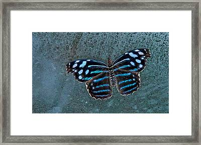 Hdr Butterfly Framed Print