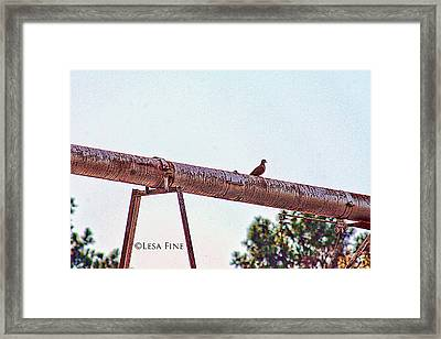 Hdr Dove On A Pipe Framed Print