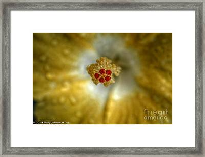 Hdr Hibiscus Framed Print by Mary  King