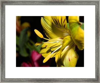 He Brought Me Flowers Framed Print by Tara Miller