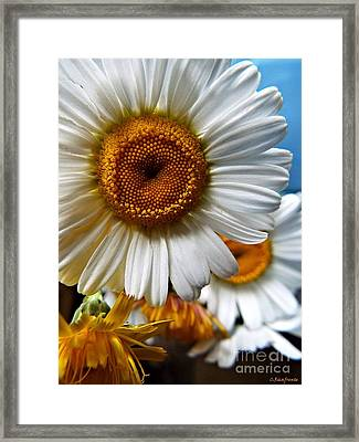 He Loves Me Framed Print by Christy Ricafrente