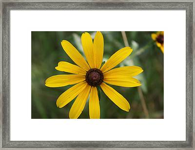 He Loves Me He Loves Me Not Framed Print by Terry Scrivner