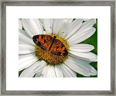 He Loves Me Framed Print