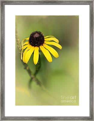 He Loves Me Framed Print by Sabrina L Ryan