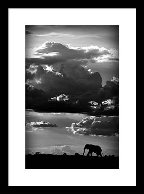 Chobe National Park Framed Prints