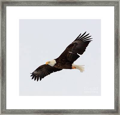He Will Raise You Up On Eagle's Wings... Framed Print