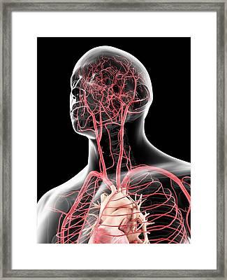 Head Arteries Framed Print