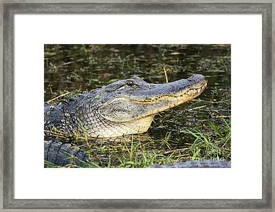 Head In The Air Framed Print by Adam Jewell