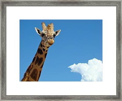 Framed Print featuring the photograph Head In The Clouds by Paul Foutz