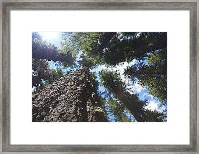 Head In The Clouds Framed Print by Rae Berge