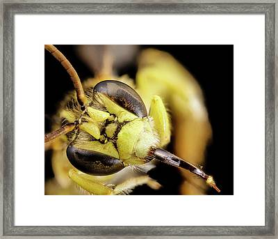 Head Of A Bee Framed Print by Us Geological Survey